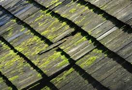 How to Keep Your Cedar Roof Moss-Free