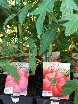 Tomate greffée supersteack F1 1l