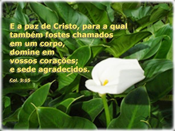 Paz? Em Cristo JESUS...