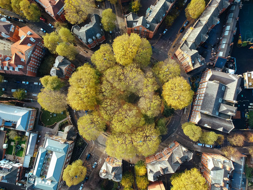 Green Infrastructure: How Cities Can Finance Tree Planting