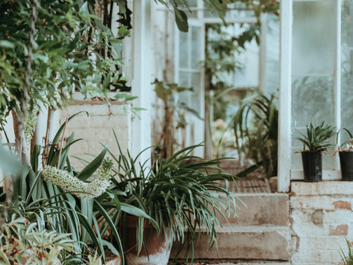 7 Air Purifying Houseplants: Learn Their Benefits