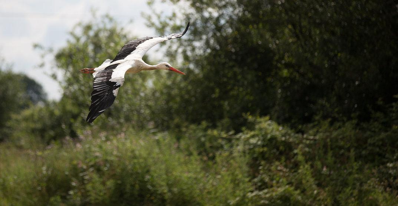 Maraou stork free flyng gauntlet birds of prey