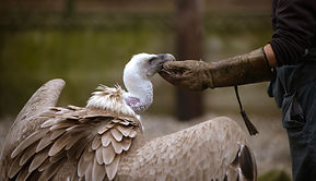 ralph vulture glove.jpg