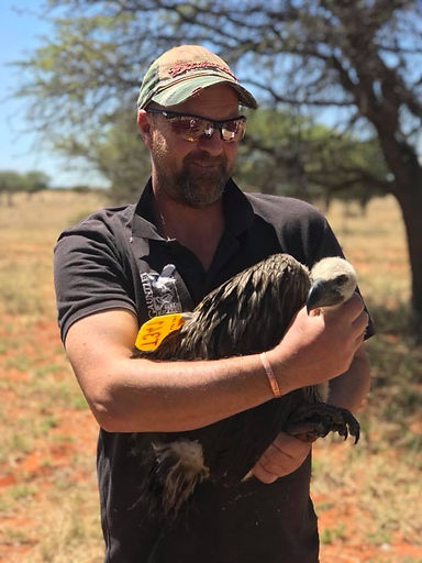 Gauntlet conservation vulture conservation south africa