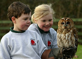 children holding owl at childrns bithday party at gauntlet birds of prey in knutsford cheshire