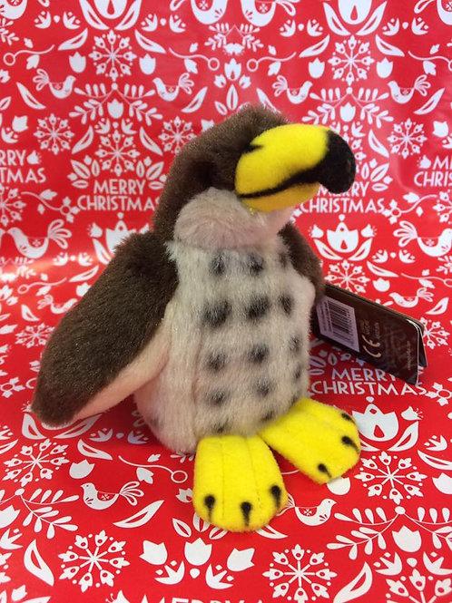 Cuddly Hawk