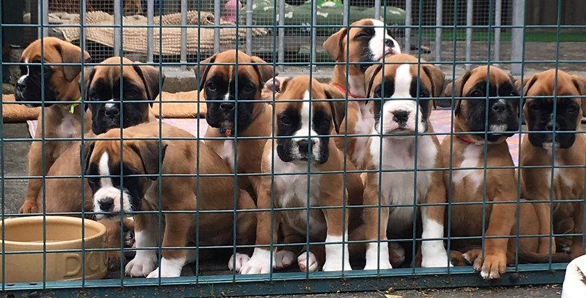 Pups L&K.jpg