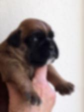 Pippa 3wk 1.jpg