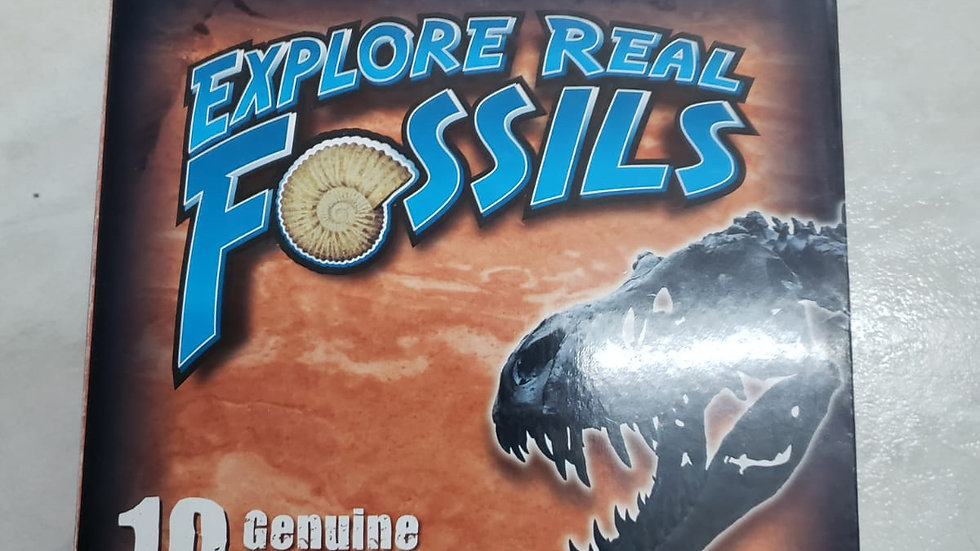 Dr Cool Explore Real Fossils