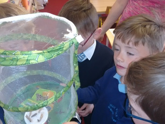 The release of the butterflies!
