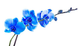 orchid-pic.jpg