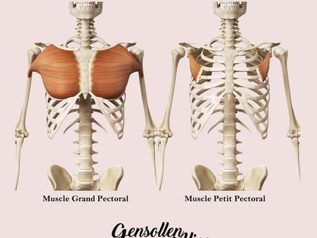 Pectoraux à étirer, Dos à muscler, Travailleurs en flexion voilà votre résolution.