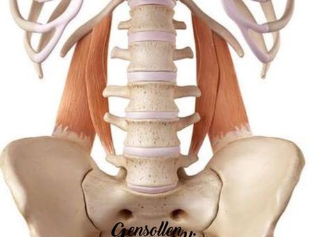 Le Muscle Carré des Lombes - Ostéopathie
