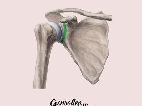 Epaule - En anatomie - Ostéopathie