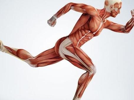 Bienfaits de l'Activité Physique (1)