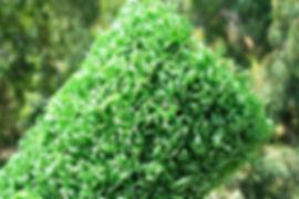 草坪用曲丝
