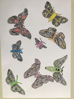 Schmetterlinge.JPG