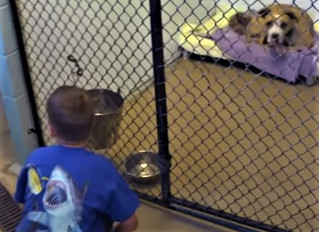 Boy who was adopted helping senior dogs