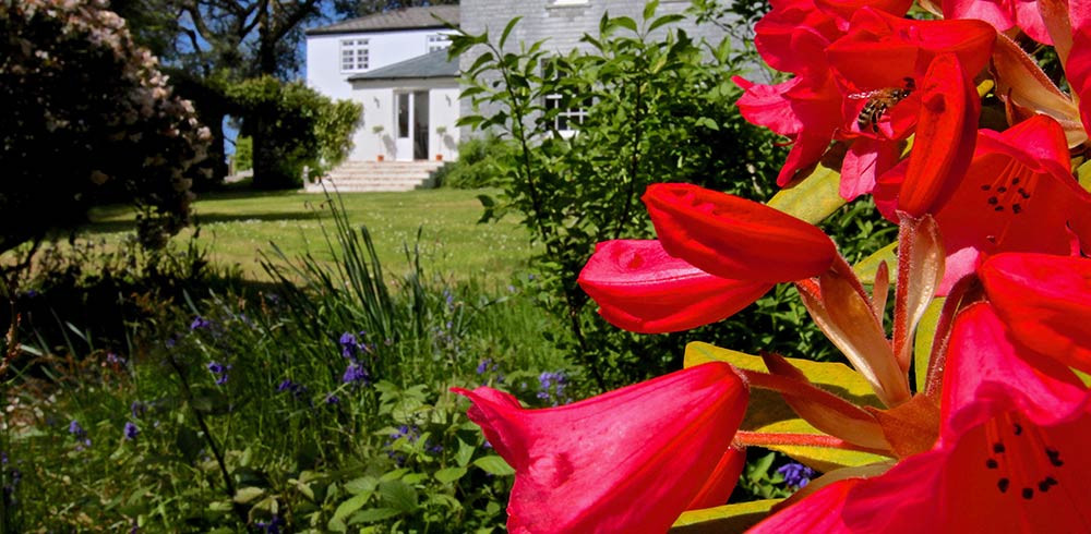 Beautiful flowers in foreground of Georgian house Treseren