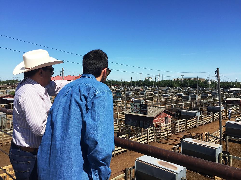 FGH Agro´s Livestock specialist at OK National Stockyards