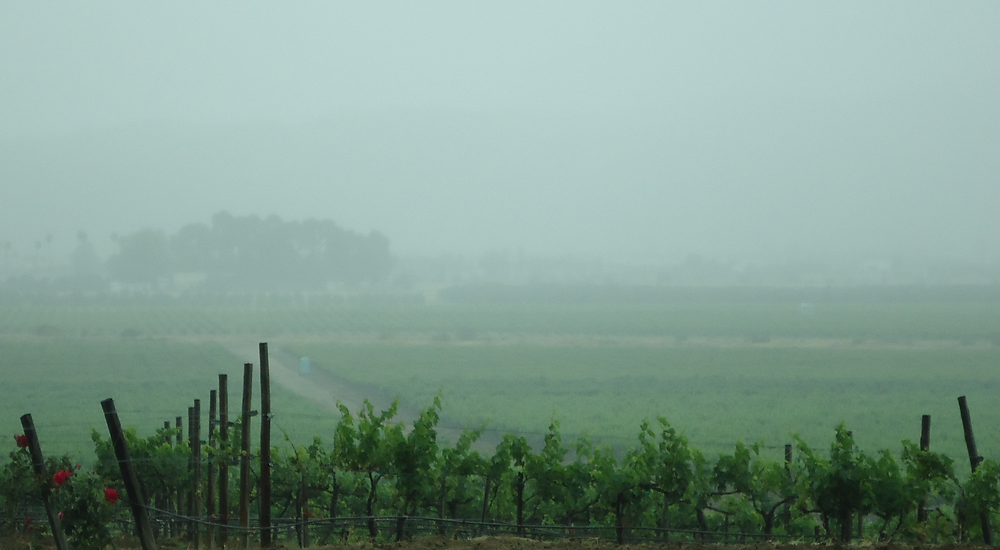 Valle de Guadalupe, MX  vineyard at early may rainy day.