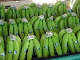 """FGH Agribusiness Consulting: """"Our plan is to explore the organic banana market in China"""""""