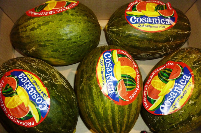 Costa Rica's melon season has been better than in previous years