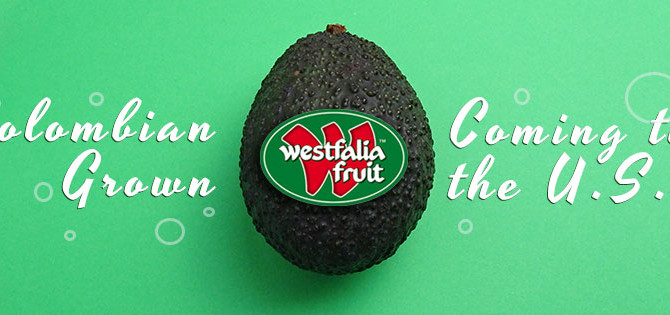 Westfalia Fruit Group's Colombian-Grown Avocados Set Sail for the U.S.