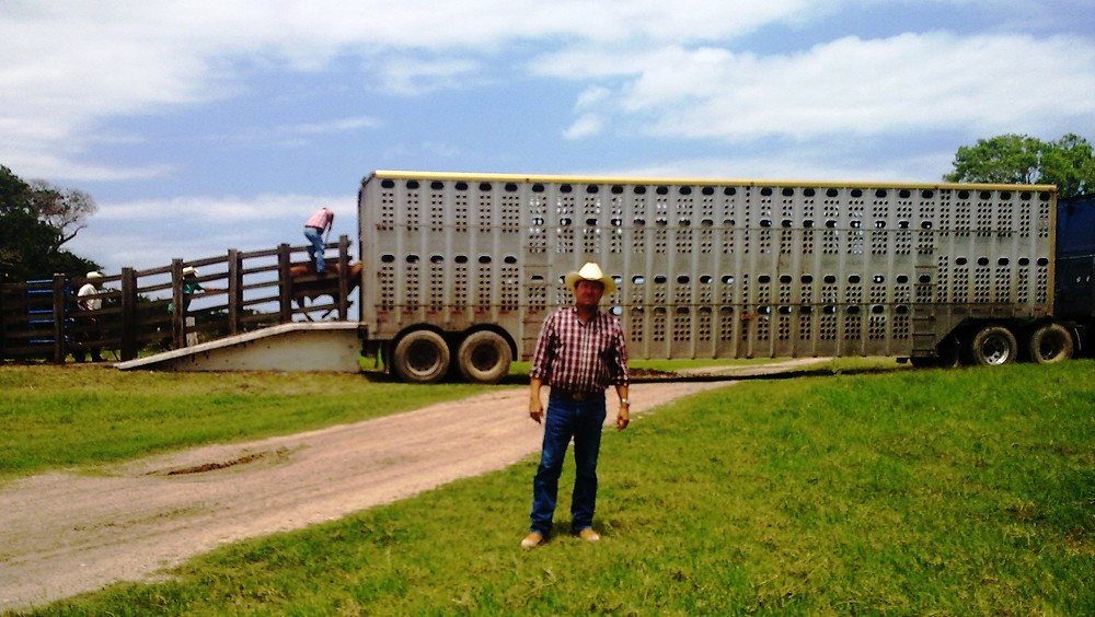 Shipping cattle to New Mexico from Tamaulipas, MX
