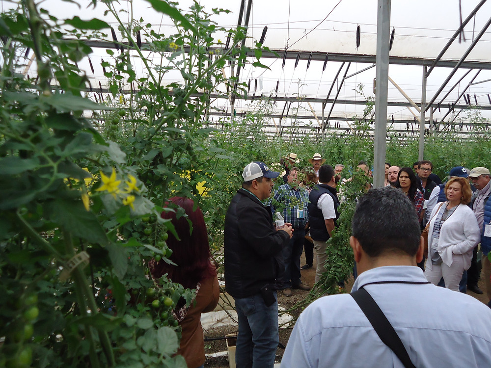 Mexican tomato grower at Ensenada, MX. with a group of international visitors
