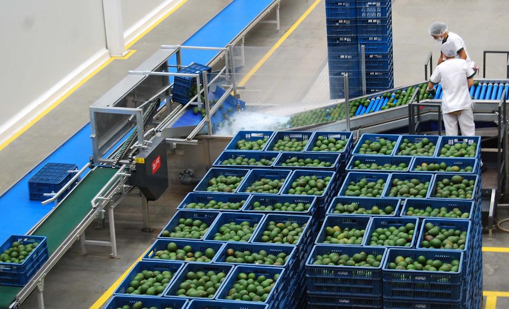 Cartama packing facility at Colombia