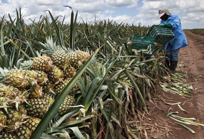 Colima, Mexico's seventh pineapple producer
