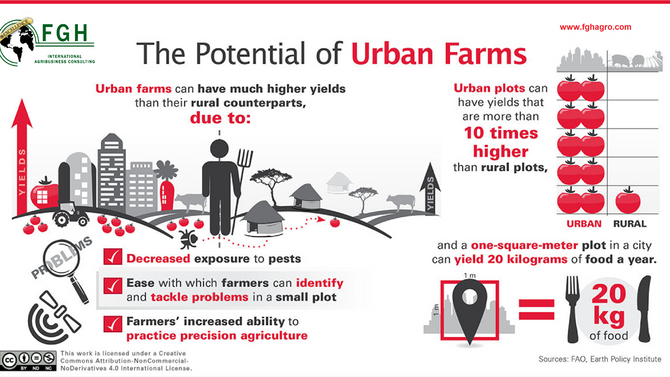 Urban farms, new tool in the fight against hunger