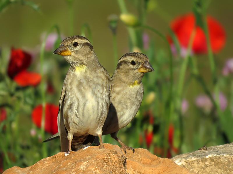Fotografía aves