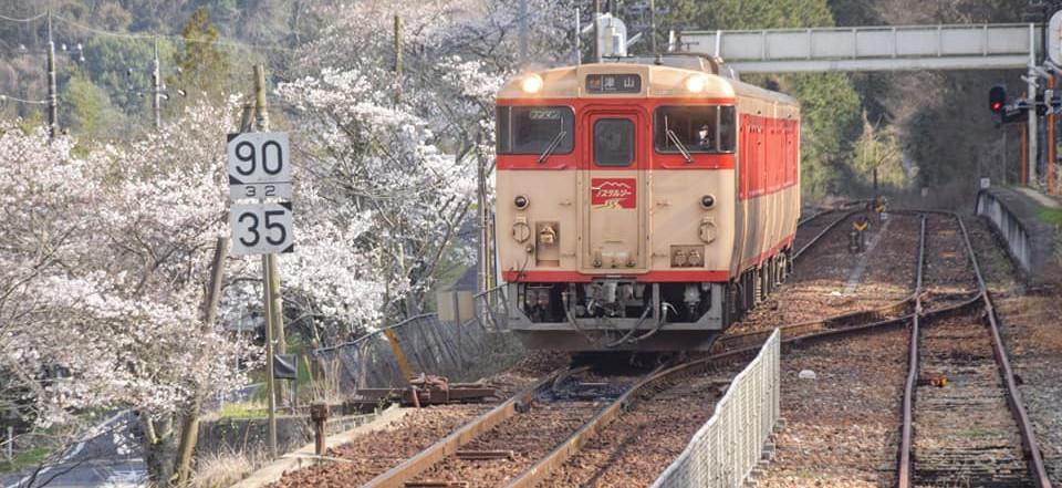 ⑤2021-3  牧山駅の桜 河西さん.jpg