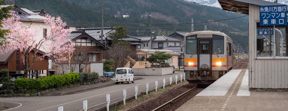 桜の咲いた大糸線姫川駅 糸魚川 赤野さん.jpg