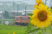 2017-7-29  向日葵と津山線.jpg