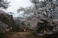 花を盛りの城内の桜