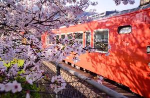 野々口駅の桜 2020