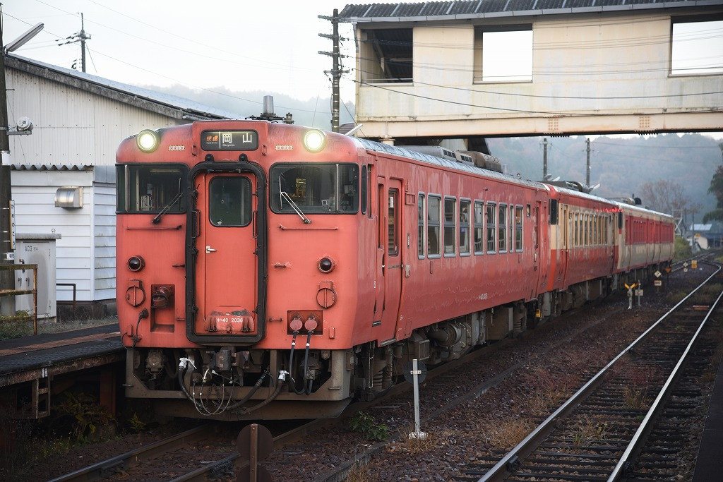 3931D 亀甲 岡本さん
