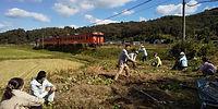 津山線のある風景 芋ほり編.jpg