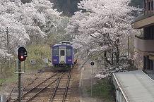 桜の季節の笠置駅