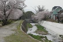 青谷川.jpg