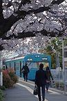 和田岬駅 桜.jpg