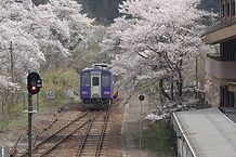 桜の笠置駅