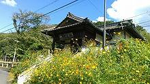 秋桜の神目駅