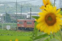向日葵と津山線
