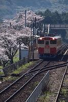 桜とノスタルジー