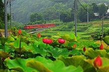 蓮の花と津山線