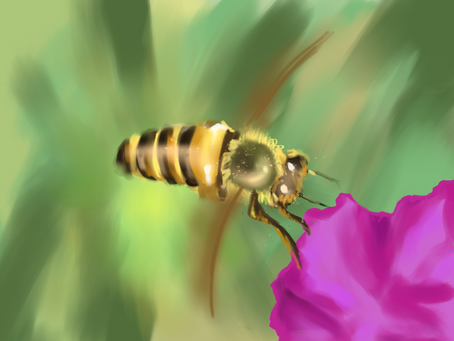 Social Structure of the Bees